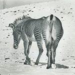 editors-picks-album